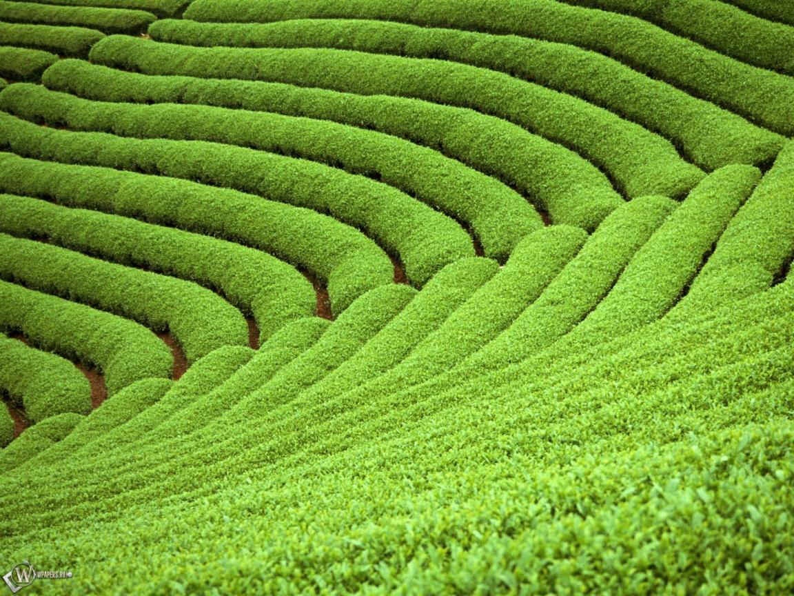 Письма о тайваньском чае (письмо второе).
